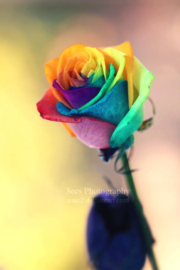 shine_like_a_rainbow_by_aoao2-d5tp7yi